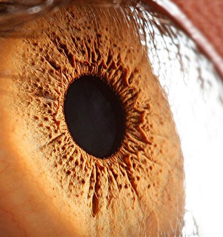 瞳のマクロ撮影1