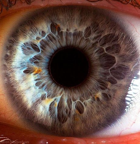 瞳のマクロ撮影9