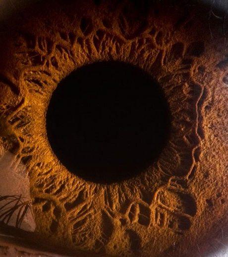 瞳のマクロ撮影14