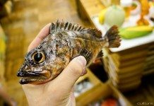 焼き魚の食品サンプル