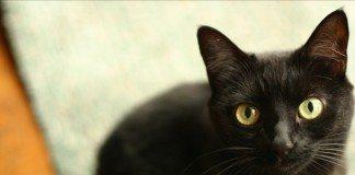 こっちを見つめる黒猫