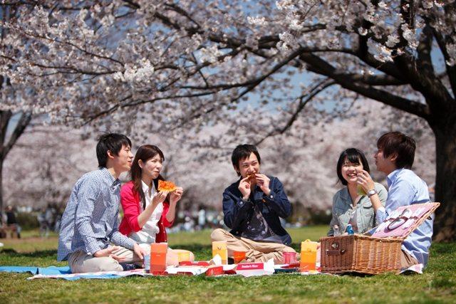世界に伝えたい日本文化~なぜ日...