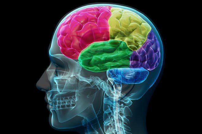 バイリンガルの脳