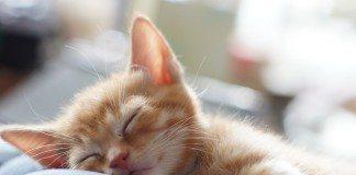 こうすれば睡眠の質が良くなる?世界の驚くべき睡眠習慣7つ