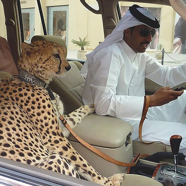 ドバイの金持ちの日常が想像以上に凄いことがわかる画像35選